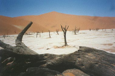 Dead vlei and Big Daddy Dune, Namib Desert