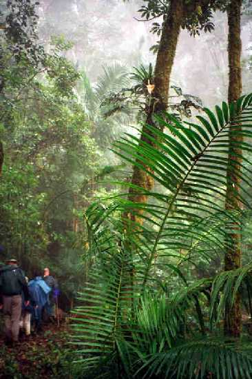 Hiking in Cloud Forest, Savegre